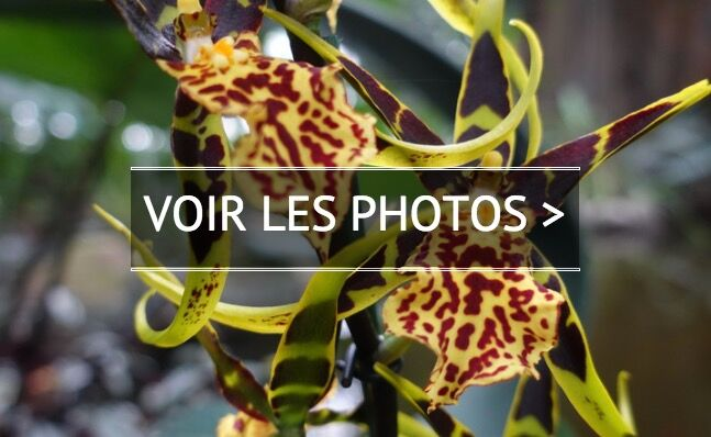 VIDÉO – Orchidées en cascade au Jardin des Plantes de Paris - Geo.fr
