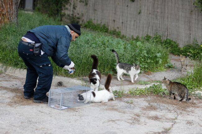 Vitesse datant salle de chat