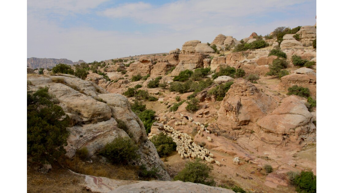 Moutons dans la vallée de Dana