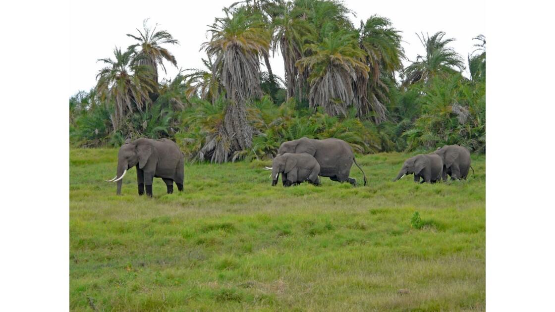 Kenya Parc d'Amboseli Troupeau d'éléphants dans les marais