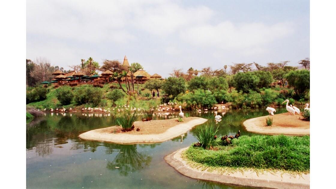 San Diego Zoo Safari Park Kupanda Botanical Garden 2