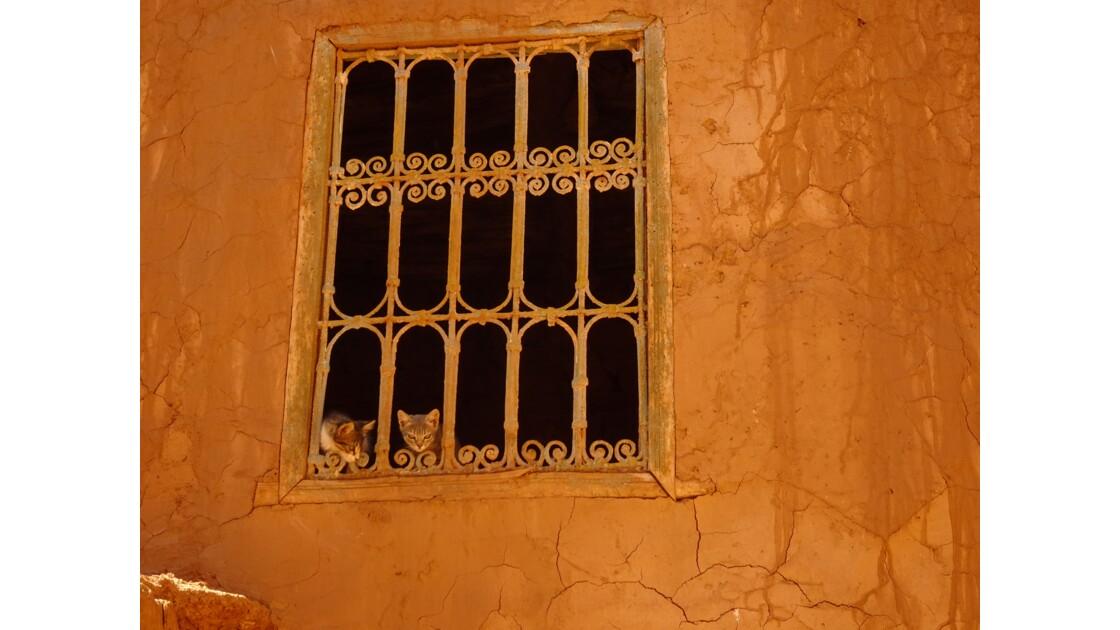 Fâneries dans la kasbah