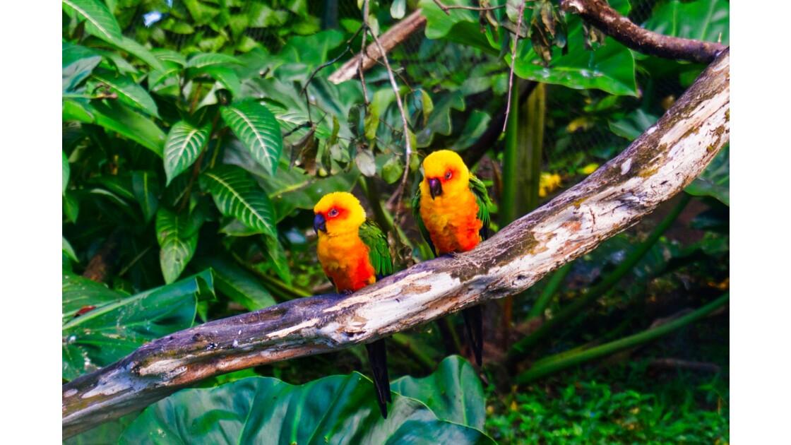 Les animaux de la Guadeloupe