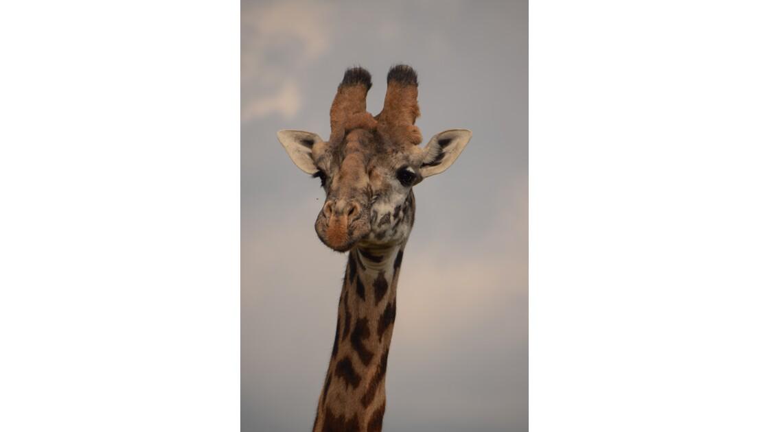 Girafe, Naivasha, Kenya