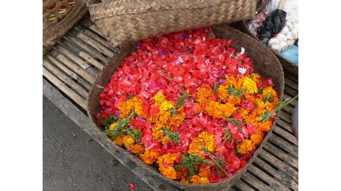 Bali offrandes