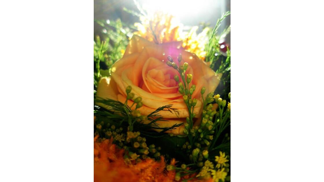 rose____2.JPG