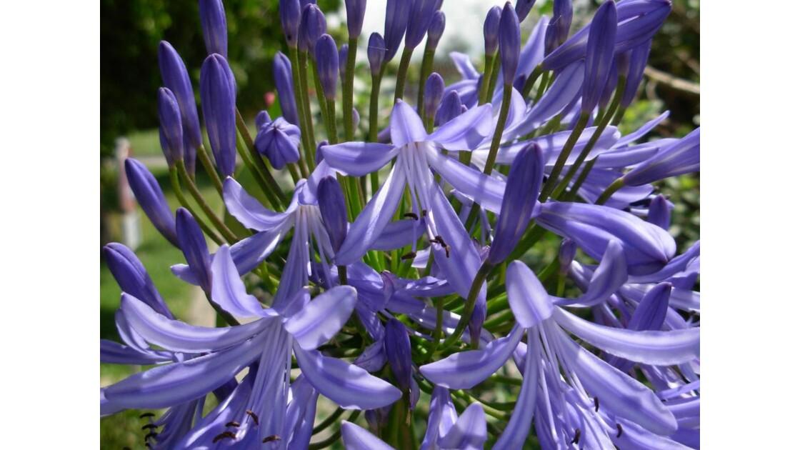 Jardin_botanique____.JPG