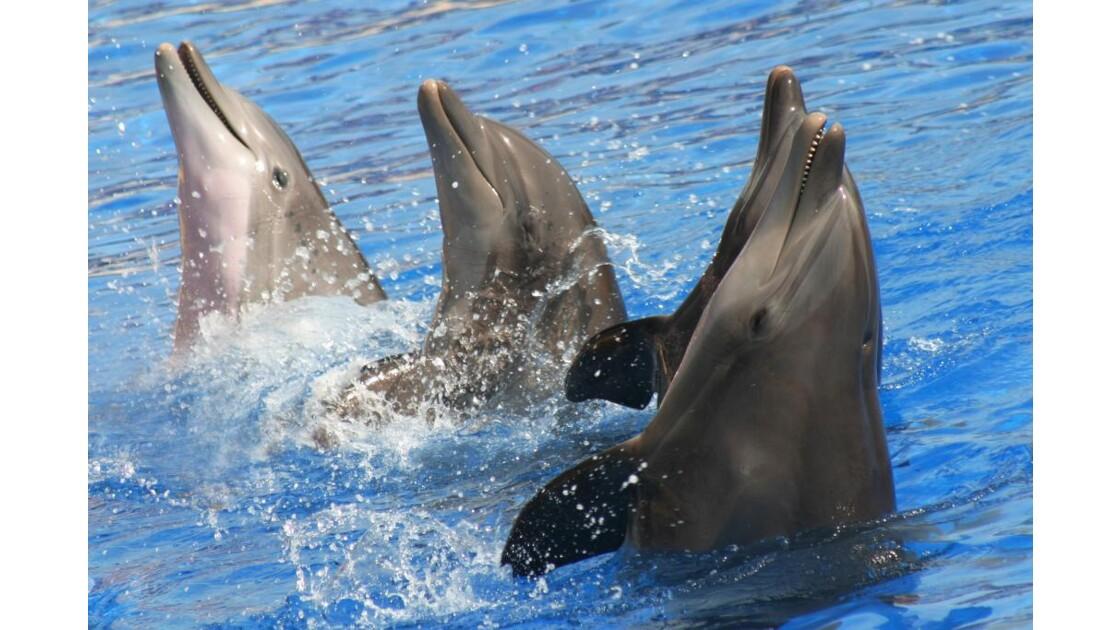 Les dauphins s'amusent