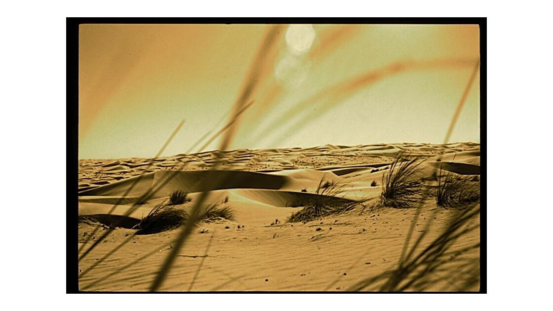 Merveilleuses dunes..