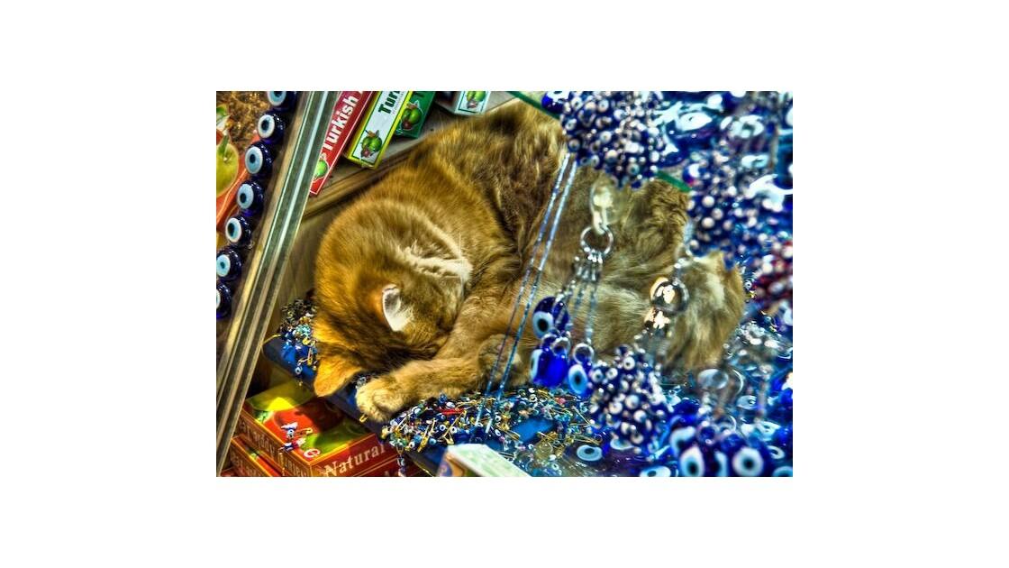 Chat dans le vieux bazar d'Istanbul