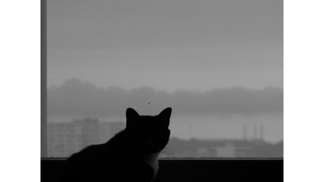 chat des villes