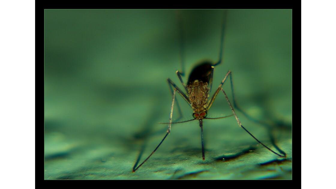 Un vilain moustique