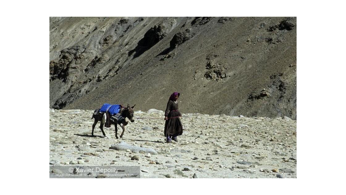 Nomade du Ladakh