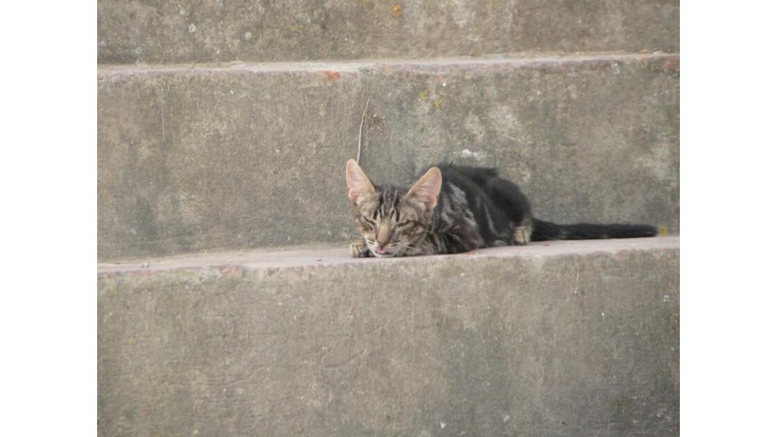 petit chat échaudé