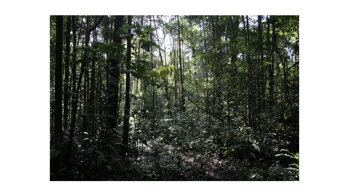 forêt en Guyane