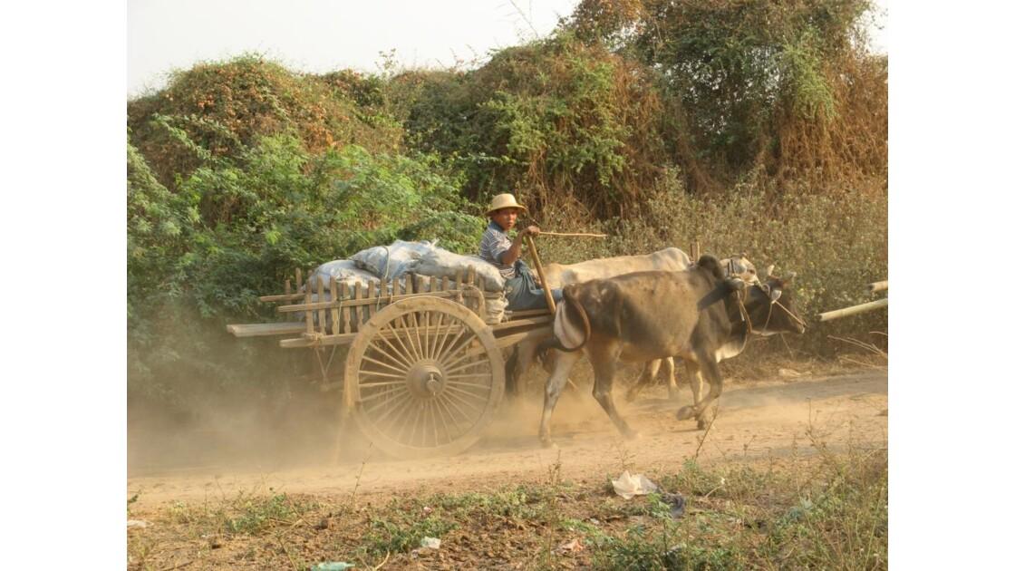 Bagan, paysan Birman et son attelage