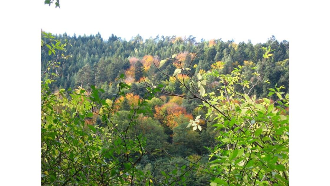forêt autour du mont Sainte-Odile