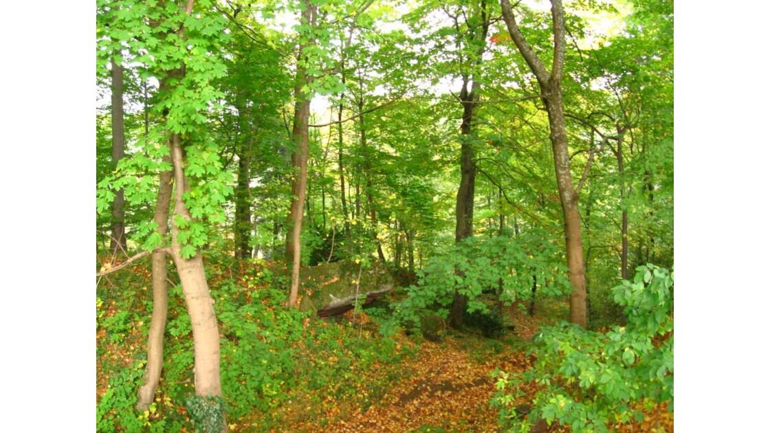 forêt autour du château Wangenbourg