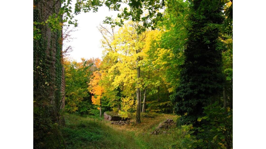 forêt autour du château de Wangenbourg