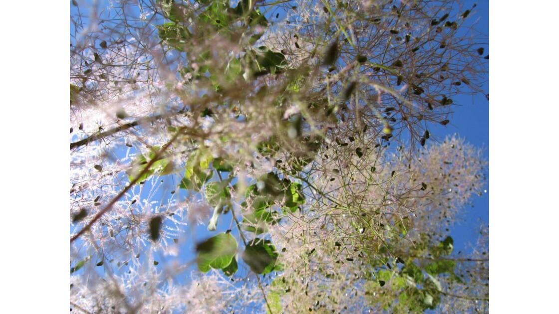 Arbres et feuilles du Luberon