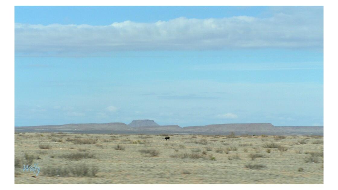 désert en Arizona