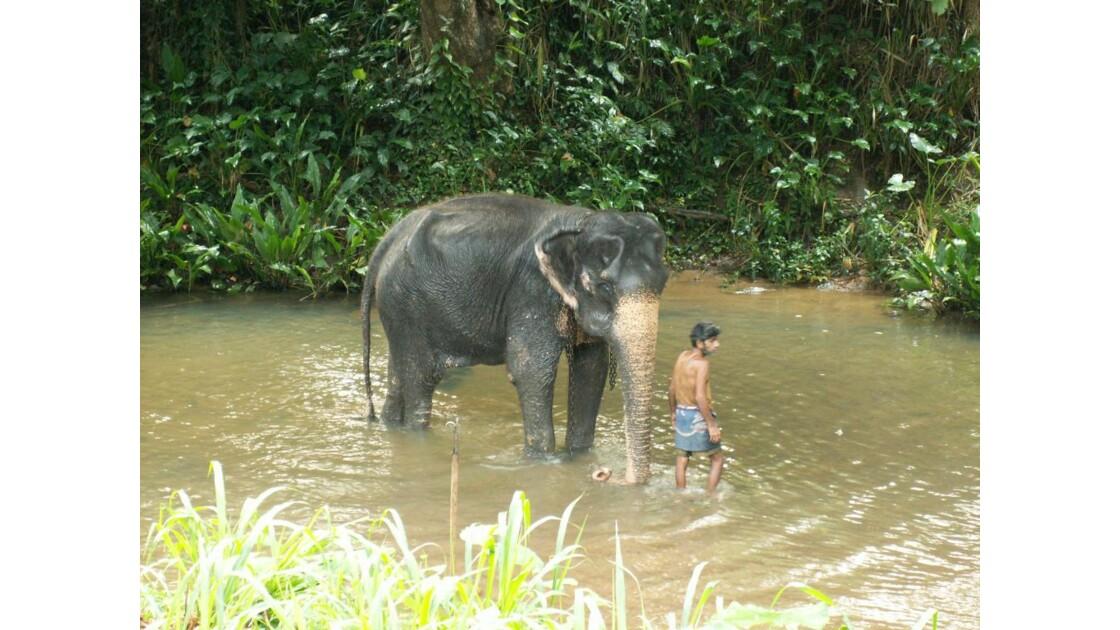 Cornac et son éléphant.JPG