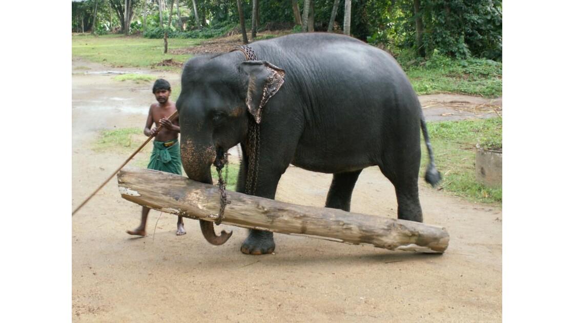 Cornac et son éléphant 3.JPG