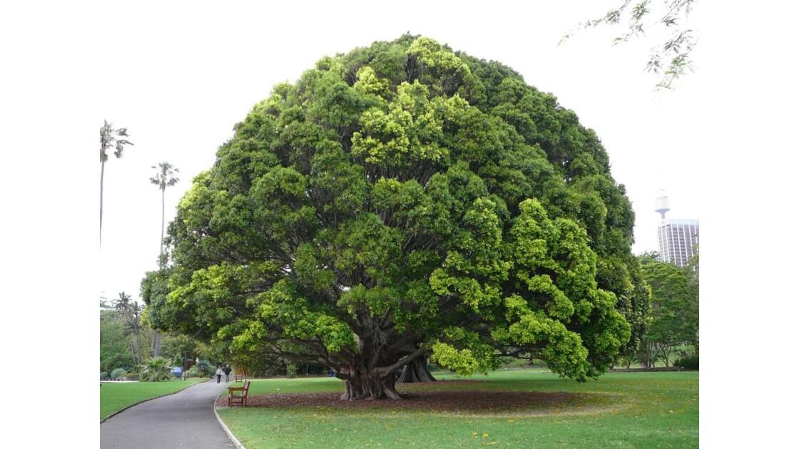 botanic garden Sydney city