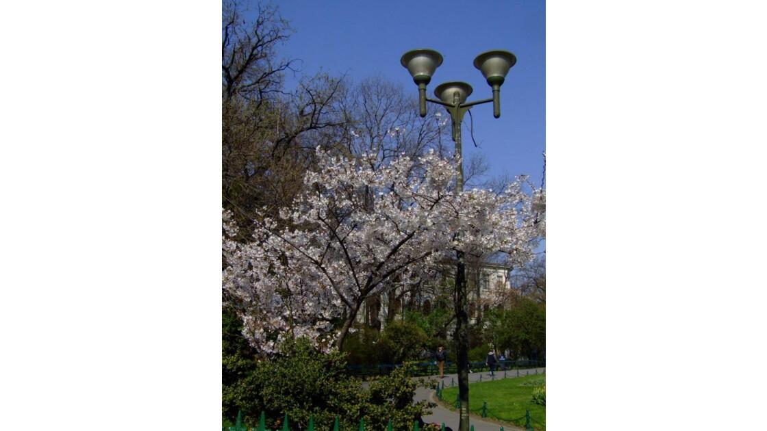 Bucarest en fleur.JPG