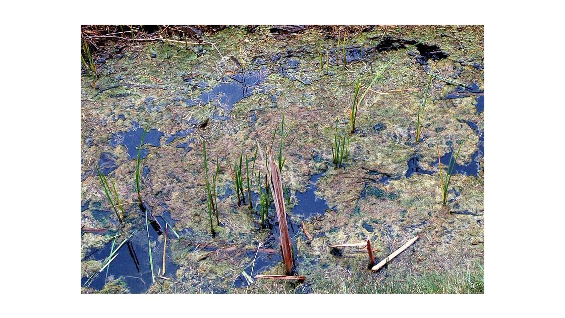 Marais : eau tagnante