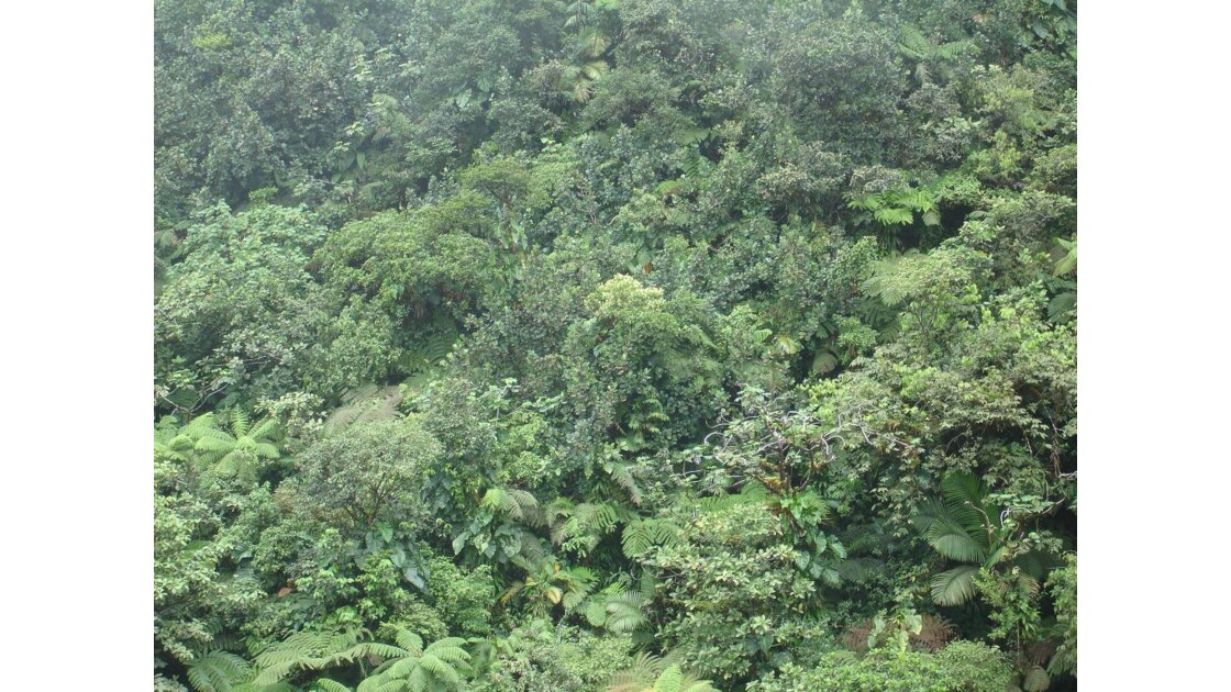 végétation_tropicale.jpg