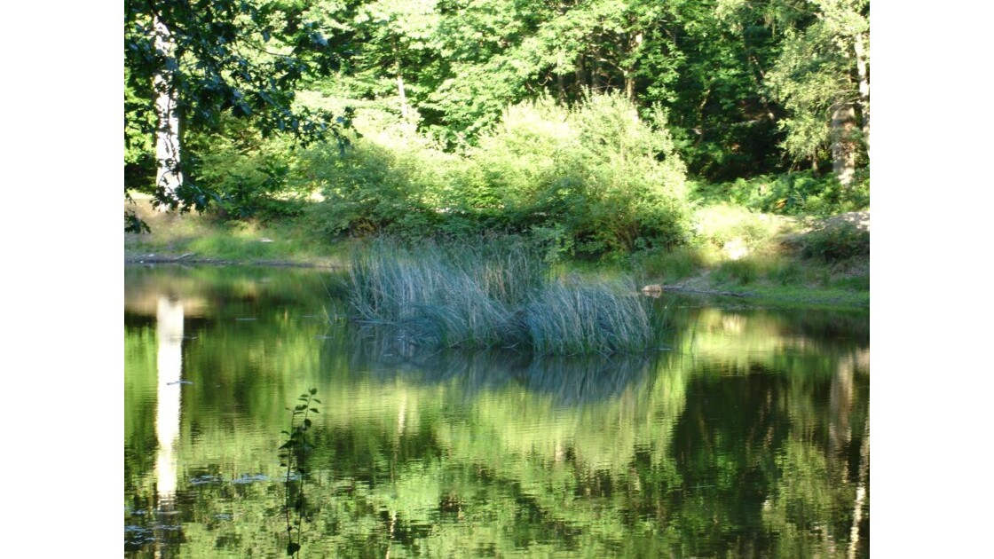 reflets_d eau.JPG