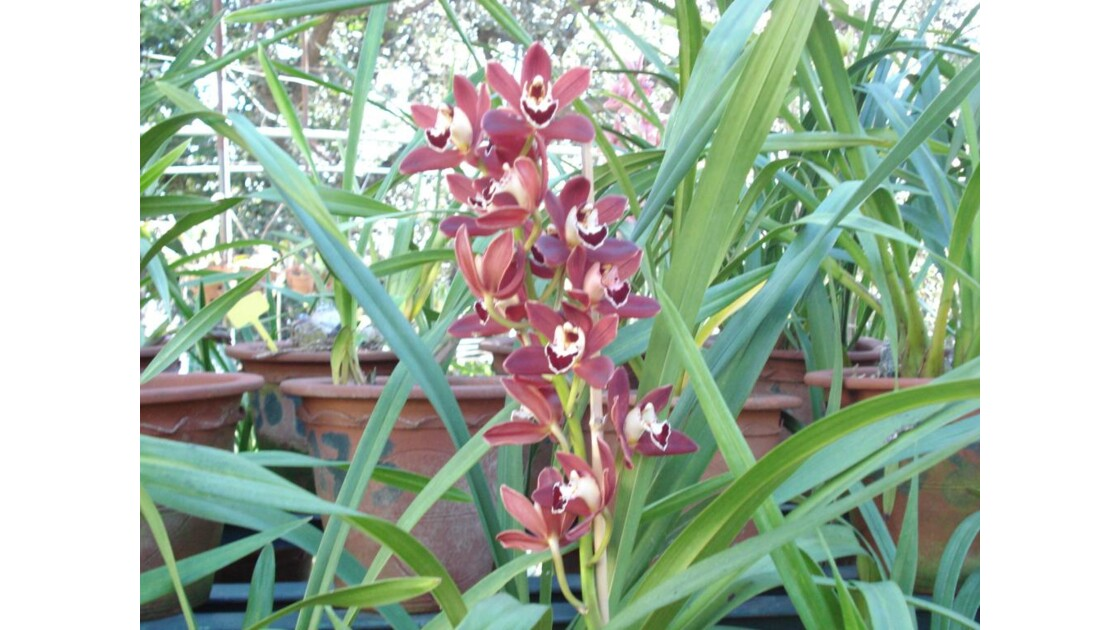 orchidee funchal madere