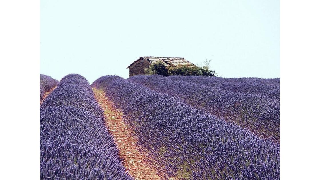Couleur de Provence.jpg