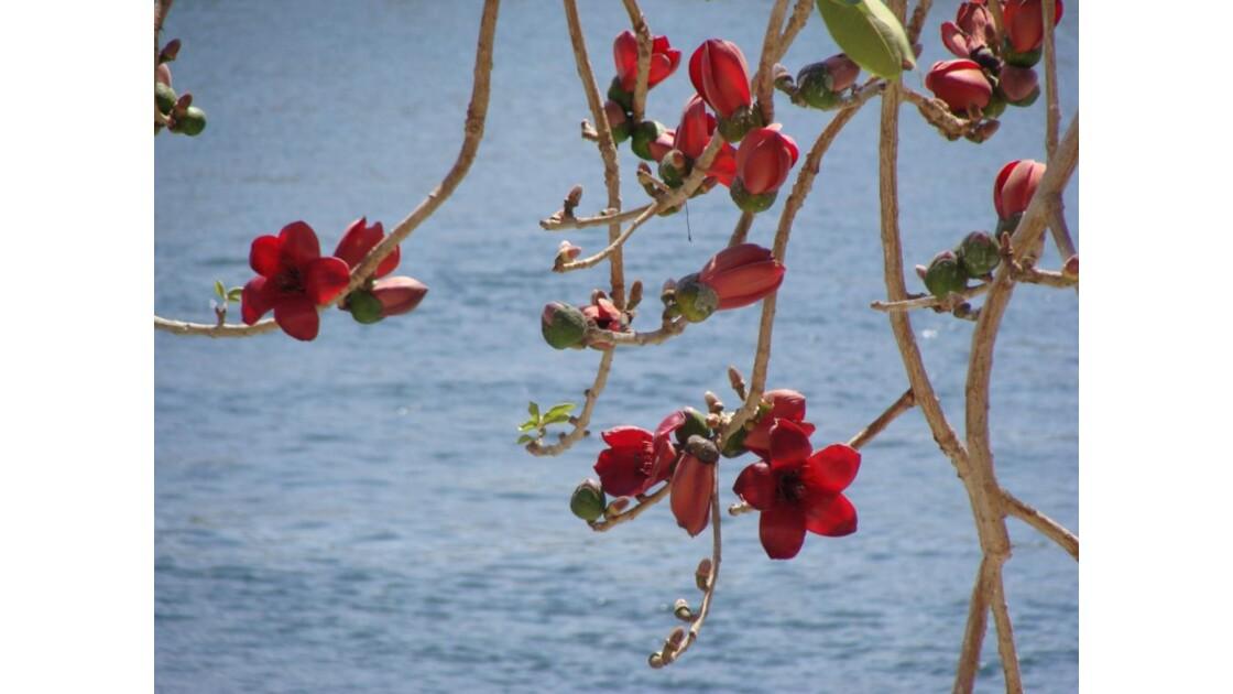 Fleurs sur le Nil.JPG