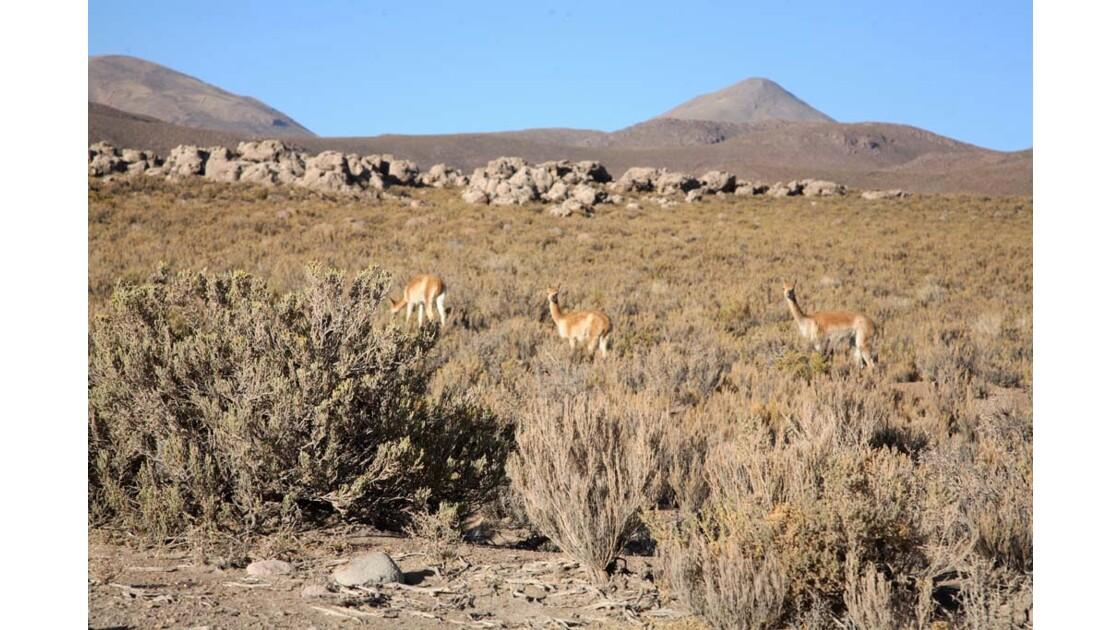 _MG_3049.jpg   Hauts plateaux Boliviens