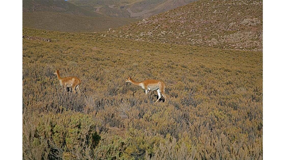 _MG_3052.jpg   Hauts plateaux Boliviens