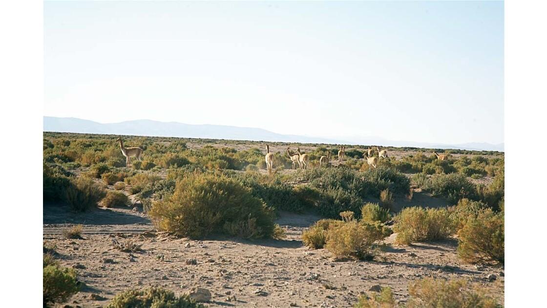 _MG_3070.jpg  Hauts plateaux Boliviens