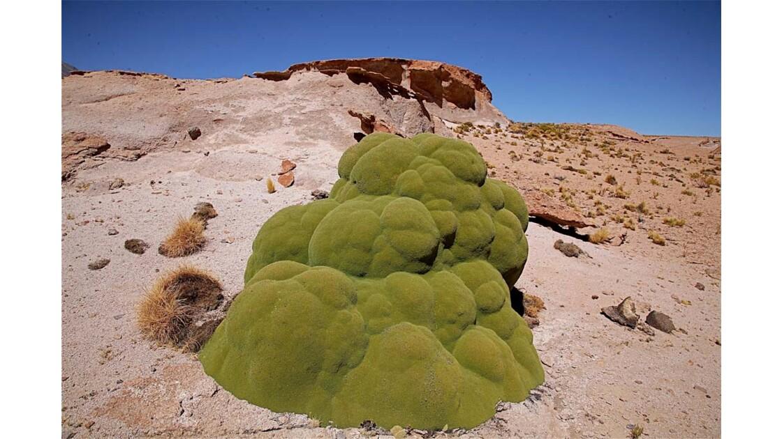 _MG_3130.jpg   Hauts plateaux Boliviens