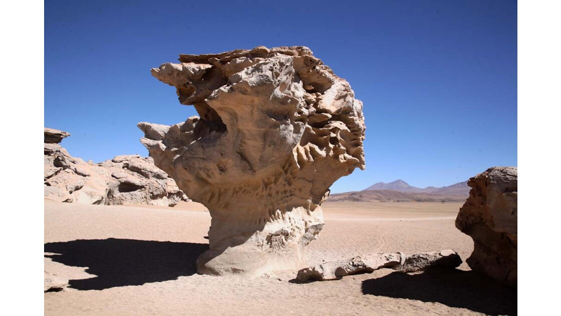 _MG_3386.jpg  hauts plateaux Boliviens