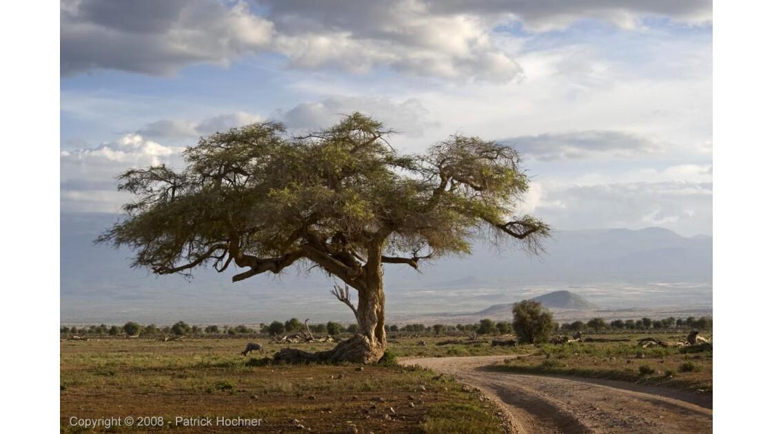 Désolation à Amboseli