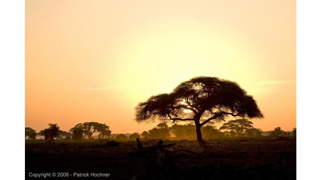 Coucher de soleil dans la parc Amboseli