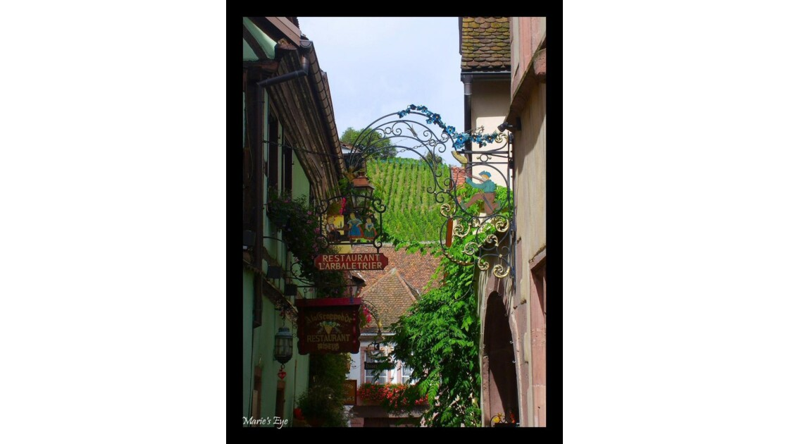 Alsace7.jpg