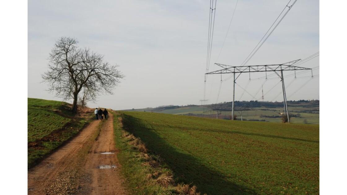 l'arbre et le pylone