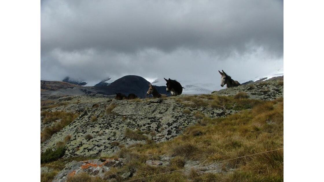 Savoie.Sur fond de glacier et nuages