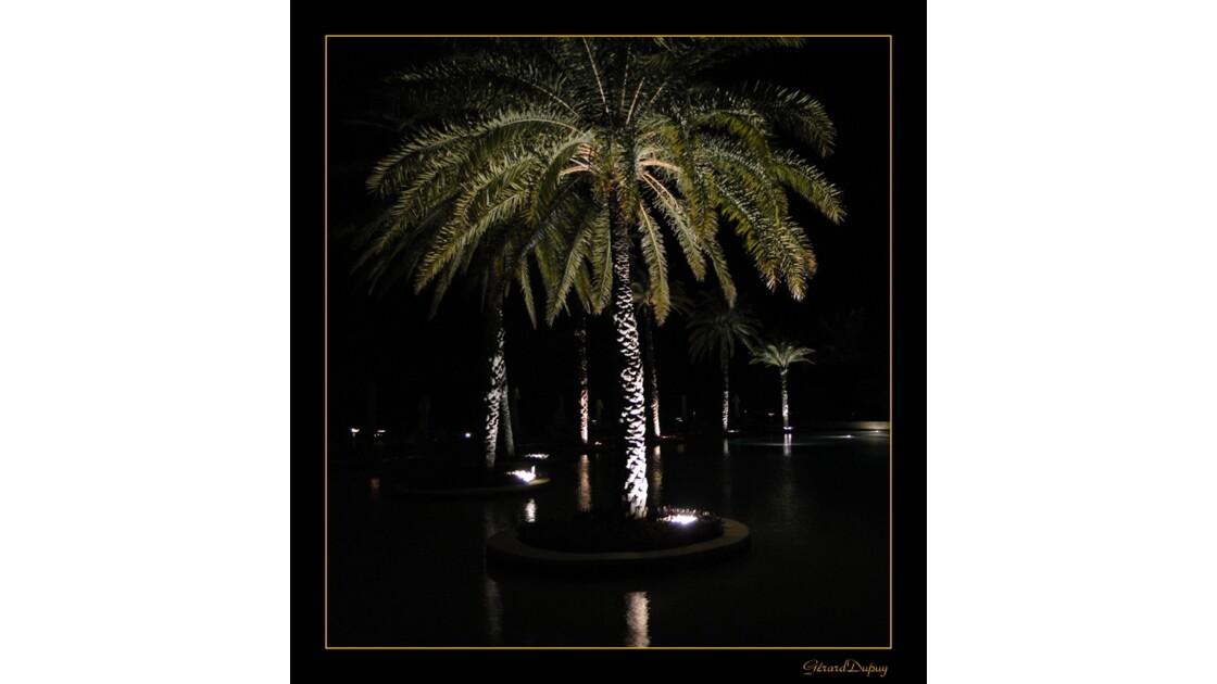 Palmiers pieds dans l'Eau 2