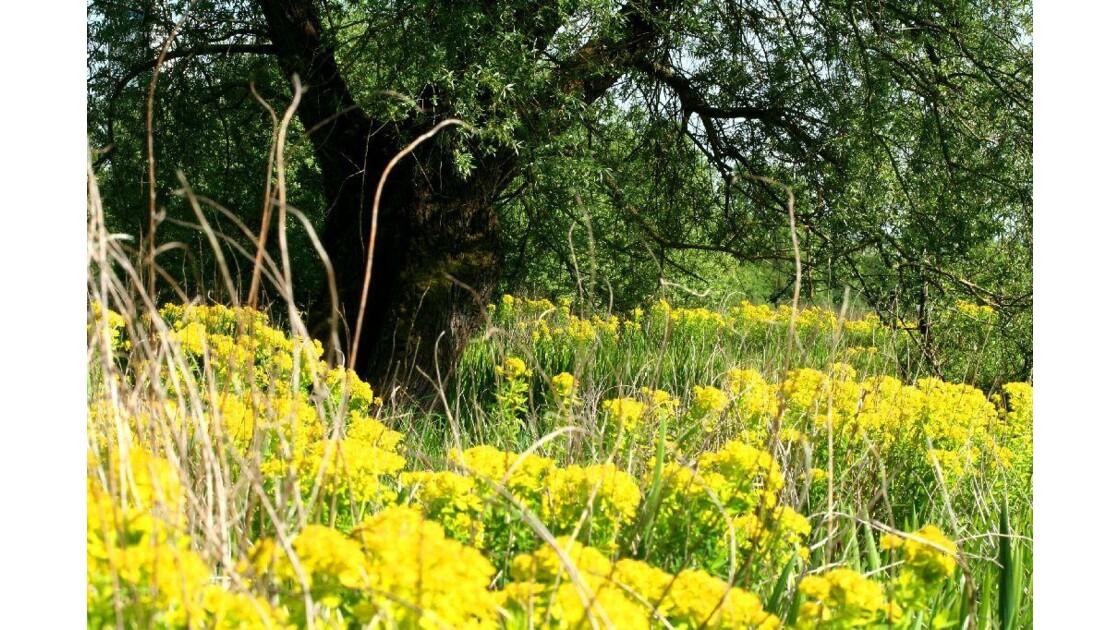 Marais fleuri