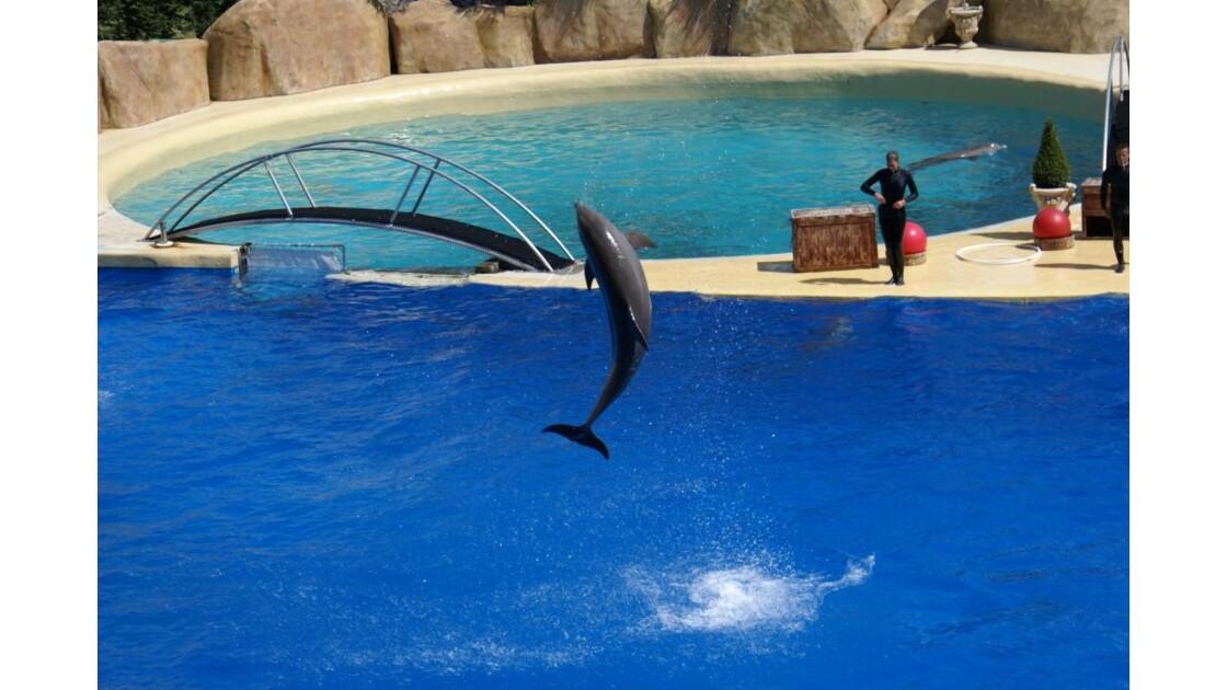 Saut de dauphin