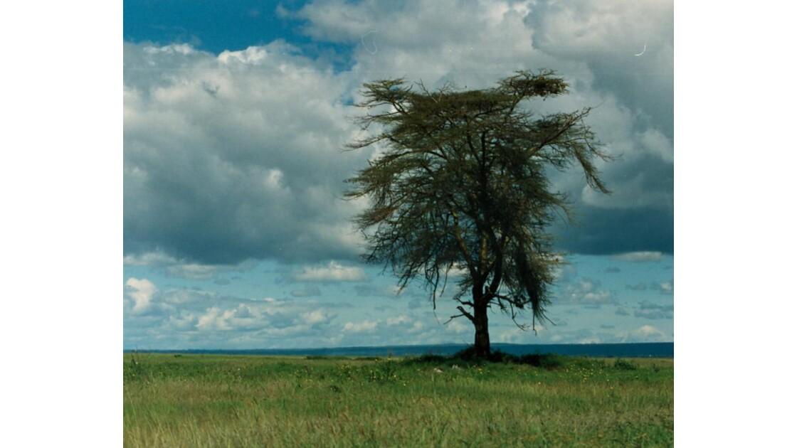 Amboseli...