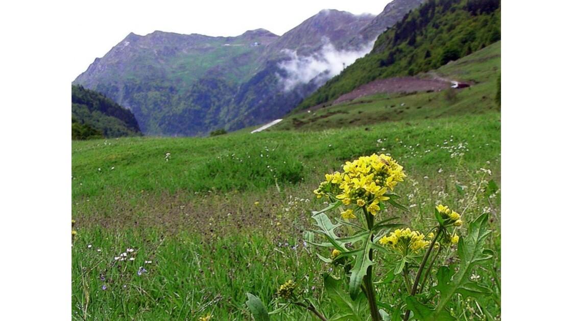 Fleur jaune et petit nuage
